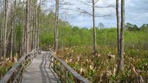 7 hour Everglades Tour with Airboat and Big Cypress Preserve and Everglades City, Miami, Half-day...