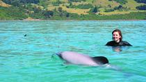 Akaroa Swim with Dolphins Tour from Christchurch, Christchurch, Swim with Dolphins
