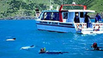 Akaroa Swim with Dolphins Tour from Christchurch, Christchurch