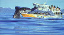 Kaikoura Whale Watch Day Tour from Christchurch, Christchurch, Dolphin & Whale Watching