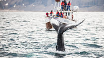 Whale Watching and Blue Lagoon Direct and Keflavik Airport, Reykjavik, Day Trips