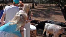 Visit an Andalusian Horse Breeding Farm in Ronda