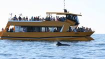 Dolphins and the Algarve Coastline Boat Trip from Albufeira, Albufeira, Day Cruises