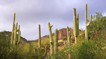 Small-Group Tour: Deluxe Phoenix and Scottsdale Day Trip, Phoenix, Half-day Tours