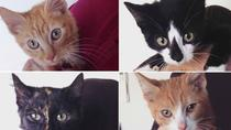 Catmosphere Cafe Sydney: Coffee with the Kitten Cadets, Sydney, Coffee & Tea Tours