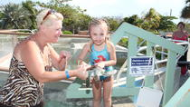 Half-Day West Bay and George Town Sightseeing Tour in Grand Cayman, Cayman Islands, Half-day Tours