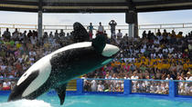 Miami Seaquarium with Animal Shows and Round Trip Transportation, Miami, Attraction Tickets