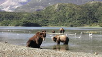 Helicopter Bear Viewing Safari to the Alaska Peninsula , Homer, Helicopter Tours