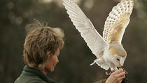 International Centre for Birds of Prey Entrance Ticket, South West England, Zoo Tickets & Passes