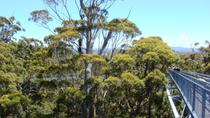 Valley of the Giants and Tree Top Walk Day Tour from Perth, Perth, Day Trips