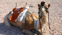 Camel Safari with Optional Bedouin Dinner, Sharm el Sheikh