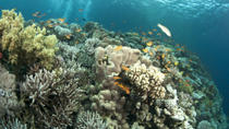 Glass Bottom Boat Cruise and Coral Reef Viewing, Sharm el Sheikh, Scuba Diving