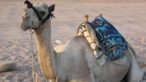 Private Tour: Sinai Jeep Safari, Abu Galum Snorkeling, Camel Ride and Bedouin Lunch, Sharm el ...