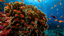 Ras Mohamed Red Sea Cruise and Snorkeling, Sharm el Sheikh, Scuba & Snorkelling