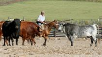 Andalusia Horses Show and Visit to Medina Sidonia from Jerez