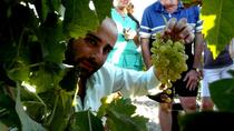 Sherry Wine Tour in Jerez, Cádiz, Wine Tasting & Winery Tours