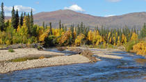 Chena River Guided Fishing Tour, Fairbanks, Fishing Charters & Tours