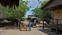 Ostrich Farm and HATO Caves Combo Adventure, Curacao, Ports of Call Tours