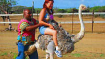 Ostrich Farm and HATO Caves Combo Adventure, Curacao