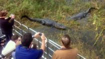 Florida Everglades Airboat Tour and Alligator Encounter from Orlando, Orlando, Day Trips