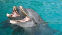 Palma Sola Bay Sightseeing Dolphin Cruise, Sarasota, Dolphin & Whale Watching