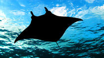Buceo de superficie nocturno con mantarrayas, Big Island of Hawaii, Snorkeling