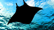 Manta Ray-Nachtschnorchelausflug ab Kona, Big Island of Hawaii, Scuba & Snorkelling