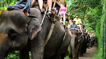 Elephant Safari Ride with Buffet Lunch in Taro, Ubud, Nature & Wildlife