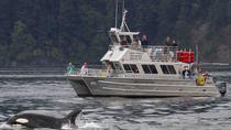 Anacortes Whale Watching, Seattle, Dolphin & Whale Watching