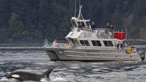 Orcas Island Whale Watching, Seattle, Dolphin & Whale Watching