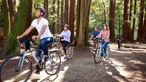 San Francisco Independent Bike Tour with Rental, San Francisco, Bike & Mountain Bike Tours