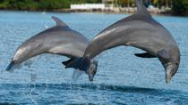 Jamaica Bay Combo Tour: Dolphin Cove and Negril Sunset Cruise from Montego Bay, Montego Bay