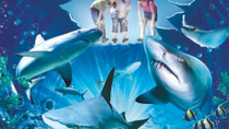 Sydney Shore Excursion: Skip-the-Line SEA LIFE Sydney Aquarium Entrance Ticket, Sydney, Ports of ...