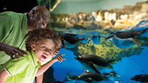 SeaWorld® San Antonio, San Antonio, Theme Park Tickets & Tours