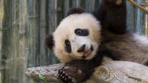San Diego Zoo with Transport, Anaheim & Buena Park, Zoo Tickets & Passes