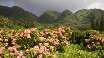 Valley of the Rainbows Oahu Small Group Adventure, Oahu, Nature & Wildlife