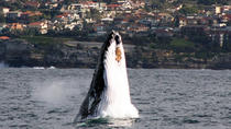 Sydney Eco Whale Watching Small Group Cruise, Sydney, Dolphin & Whale Watching