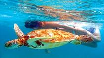 Akumal Bay Sea Turtle and Snorkel Adventure from Cozumel, Cozumel, Snorkeling