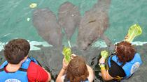 Full Day Sea-Life Adventure: Sea Lions, Manatees and Dolphins in Isla Mujeres, Cancun, Swim with ...