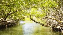 Mangrove Lagoon Tour in Cancun, Cancun, Day Cruises
