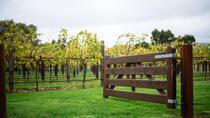 Jacobs Creek Vineyard Tour, Wine Tasting and 2-Course Lunch, Barossa Valley, Wine Tasting & Winery ...