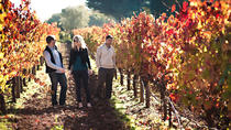 Vine to Wine Napa and Sonoma Day Trip with Tastings and Organic Winery Tour, San Francisco, Dining ...