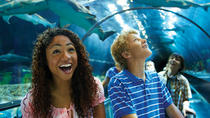SeaWorld San Diego Day Tour from Anaheim, Anaheim & Buena Park, Bus Services
