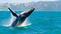 Oahu Whale Watching Cruise, Oahu, Dolphin & Whale Watching