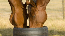 Champion Racehorse Tour with Beer and Wine Tasting, Melbourne, Food Tours
