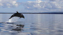 Dolphin Boat Trips On Purpose Built Passenger Vessel, Inverness, Dolphin & Whale Watching
