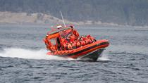 Friday Harbor Whale Watching Adventure Tour, Seattle, Dolphin & Whale Watching