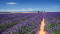 Marseille Shore Excursion: Private Aix-en-Provence and Valensole Lavender Tour, Marseille, Ports of ...
