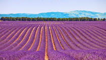 Small-Group Lavender Day Trip from Avignon: Aix-en-Provence, Valensole Plateau and L'Occitane Shop, ...