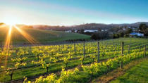 Off the Beaten Track Waiheke Island Wine Trail from Auckland, Auckland, Bike & Mountain Bike Tours